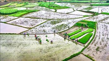 Cấp nước phục vụ đổ ải, gieo cấy vụ Đông xuân 2020 tại khu vực Trung du và đồng bằng Bắc Bộ có rất nhiều khó khăn