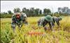 Bộ đội biên phòng Bình Phước - Chỗ dựa tin cậy của nhân dân biên giới